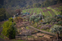 Benziger Family Winery near Glen Ellen CA Royalty Free Stock Photography