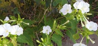Benzynowa roślina ma problemy Fotografia Stock