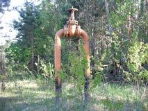Benzynowy kogut w drewnach Obraz Royalty Free