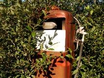 benzyny zieleń lofoten Zdjęcia Stock