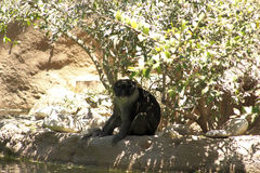Beobachten des Affen Lizenzfreie Stockfotos