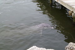 Beobachten des Delphins lizenzfreies stockfoto