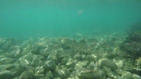 Beobachten von Fischen über felsigem Meeresgrund stock footage