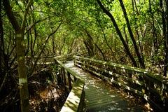 Beobachtungs-Spur im Sumpfgebiet-Nationalpark Lizenzfreie Stockfotos