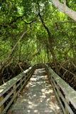 Beobachtungs-Spur im Sumpfgebiet-Nationalpark Stockbilder