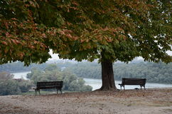 Beograd. Park in Beograd, Serbia, autumn stock image