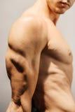 Bepaalde triceps stock afbeelding