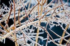 Bepflanzt coverd durch Eisregen mit Büschen   Stockbild