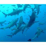 Beqa laguna, Fiji Zdjęcia Royalty Free