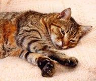 Bequem schlafen Katze stockfotos