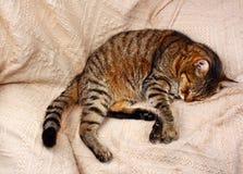 Bequem schlafen Katze stockbild