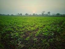 Bequeme Ansicht der Grünpflanzefelder der Natur am Sonnenschein lizenzfreie stockbilder