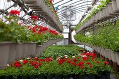 Berçário armazenado com as flores Fotografia de Stock Royalty Free