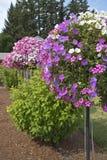 Berçário da exploração agrícola e do jardim em Canby Oregon Fotografia de Stock