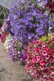 Berçário da exploração agrícola e do jardim em Canby Oregon Foto de Stock Royalty Free