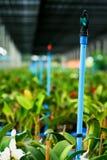 Berçário da orquídea Imagens de Stock