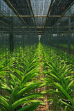 Berçário da orquídea Imagens de Stock Royalty Free