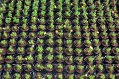 Berçário das flores Fotos de Stock