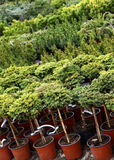 Berçário das plantas de jardim Imagem de Stock Royalty Free