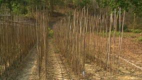 Berçário de árvores local da teca, cena da floresta, Myanmar video estoque