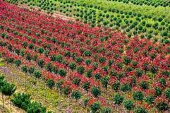 Berçário exterior em Toscânia fotografia de stock royalty free