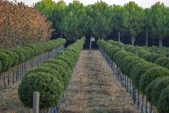Berçário exterior natural de plantas decorativas imagem de stock royalty free