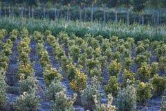 Berçário exterior natural de plantas decorativas imagens de stock