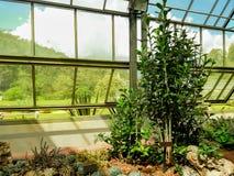 Berçário para colheitas crescentes e a luz solar alaranjada imagem de stock royalty free