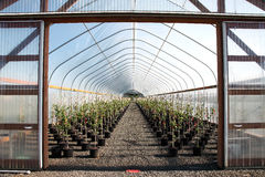 Berçários de Oregon e plantas do seedling imagem de stock royalty free