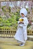 Beröm av ett typisk bröllop i Japan Royaltyfri Foto