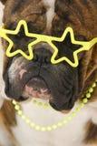 berömd hund Arkivbilder