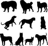 berömd hund royaltyfri illustrationer