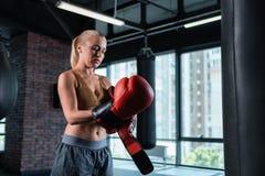 Berömd kvinnlig boxare som sätter på massiva boxninghandskar Royaltyfria Foton