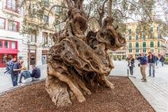 Berömd olivträd i Palma Fotografering för Bildbyråer