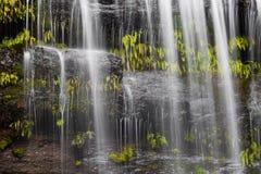 Berömd Russel Falls closeup Monteringsfältnationalpark, Tasmanien royaltyfria bilder