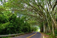 Berömd väg till Hana som är åtföljd med smala en-gränd broar, hårnålvänd och oerhörda ösikter, Maui, Hawaii Arkivbilder