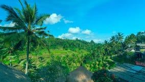 Berömda risterrasser nära Ubud i Bali royaltyfri bild