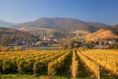 Berömda vingårdar i Wachau, Spitz, Österrike fotografering för bildbyråer