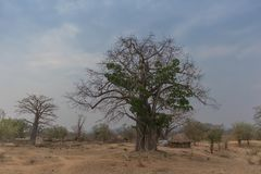 Berömt träd av africa _ _ Berömt träd av africa Bao Royaltyfri Bild