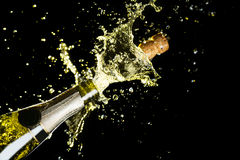 Berömtema med explosion av plaskande champagnemousserande vin på svart bakgrund