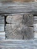 Berörda Tid trädet Royaltyfri Foto