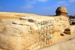 Berühmte Ägypten-Sphinx in Giza von hinten Stockbild