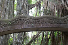 Berühmte Brücke im Affe-Wald Stockfotografie