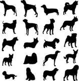 Berühmte Hunde Stockfotografie