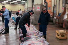 Berühmte Thunfischauktion am Tsukiji-Fischmarkt stockfotografie