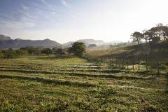 Berühmter Kuba-Ackerlandtabakbereich bei Sonnenuntergang, Valley de Vinales, stockfotografie