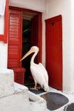 Berühmter Pelikan von Mykonos Lizenzfreie Stockfotografie