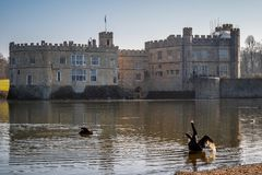 Berühmtes Leeds Castle in England - KENT, VEREINIGTES KÖNIGREICH - 27. FEBRUAR 2019 stockbilder
