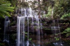 Berühmtes Russell Falls im Berg-Feld-Nationalpark, Tasmanien, Australien stockfotos
