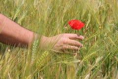 Berühren einer Blume Lizenzfreies Stockfoto